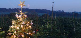 Foto de Dodds Christmas Trees Leeds