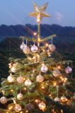 Fotos de Dodds Christmas Trees Leeds